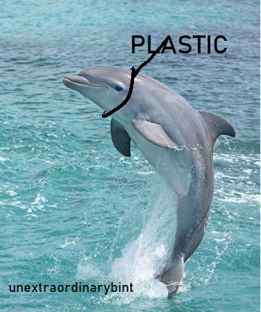 plasticdolphinstrangledbiasHumanHealthcare