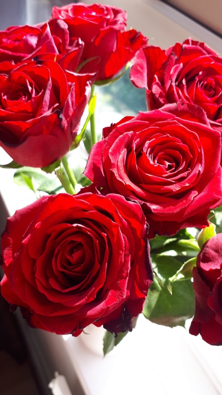Red roses by Samantha Harris